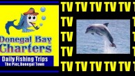 We film your trip producing youtube highlights for facebook When you fish with us we will show the vast array of delights the waters in Donegal Bay have to offer, […]